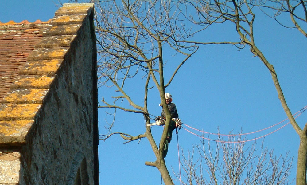 Tree Preservation Orders and Conservation Areas