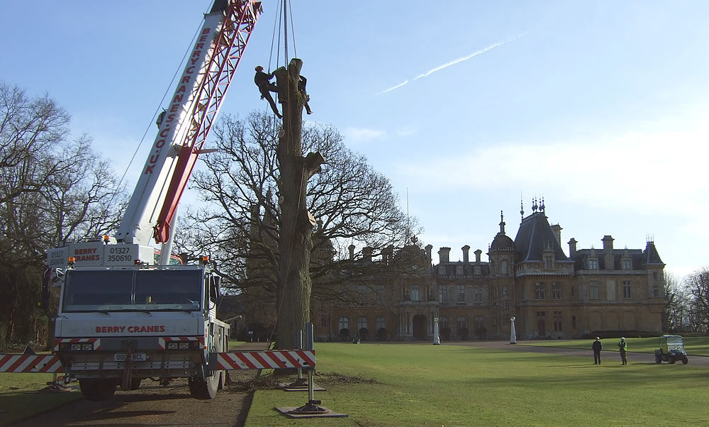 Taking a tree out with a crane
