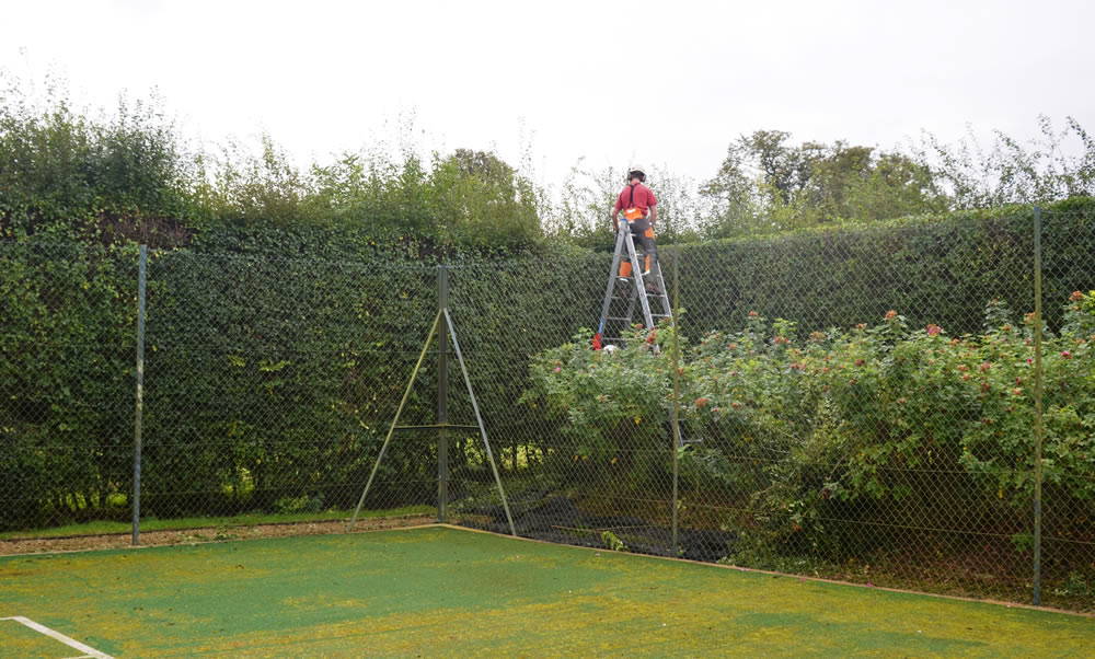 Hedge Trimming - Tree Profiles Ltd