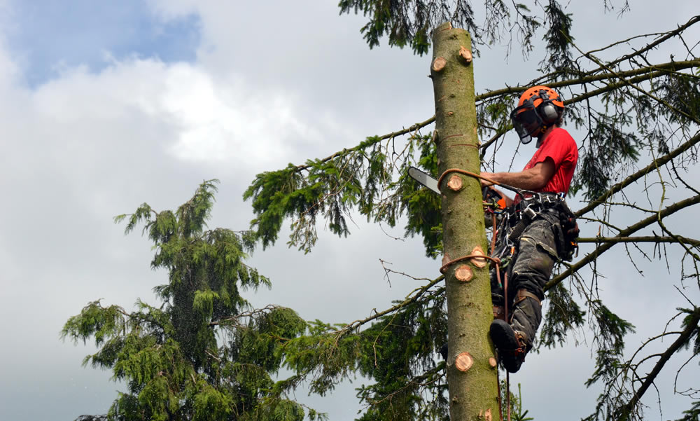 Tree Surgery Services - Tree Surgeon removing the top of a tree