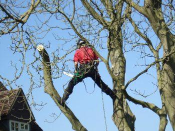 Permalink to: Tree Pruning