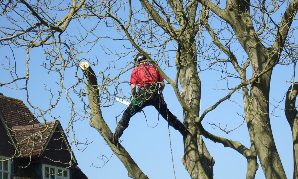 Tree Pruning - Tree Profiles Ltd