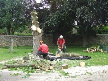 Permalink to: Tree Felling