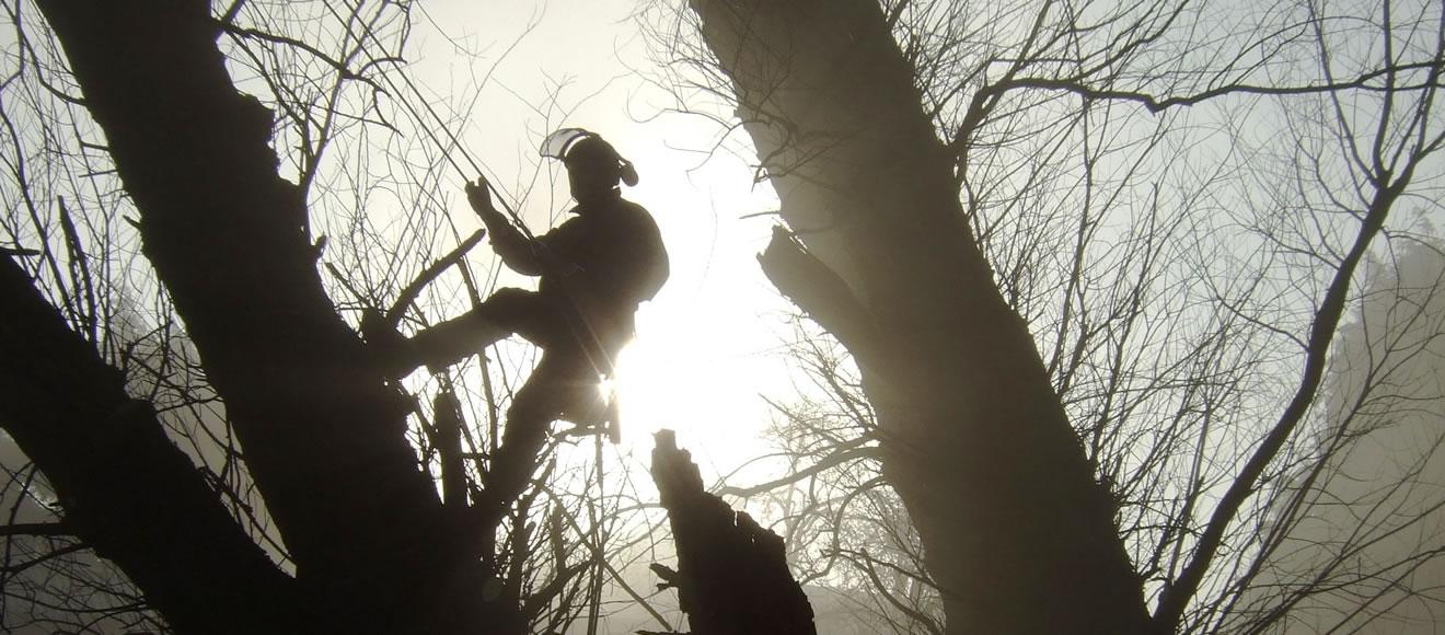 Tree Profiles Ltd - Tree Removal from Pond
